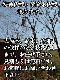 特殊伐採・危険木伐採、承ります